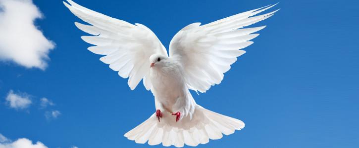 westshore white doves